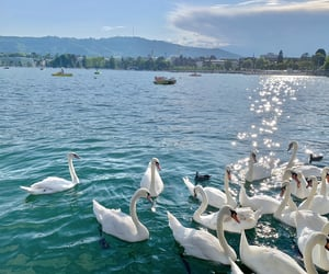 beautiful places, birds, and blue image
