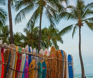 beach, palm trees, and surf boards image