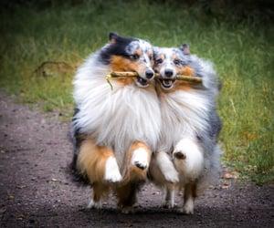 dog and stick image