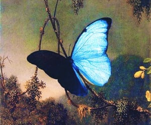 butterfly, art, and aesthetic image