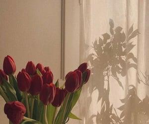 aesthetics, flowers, and sun light image