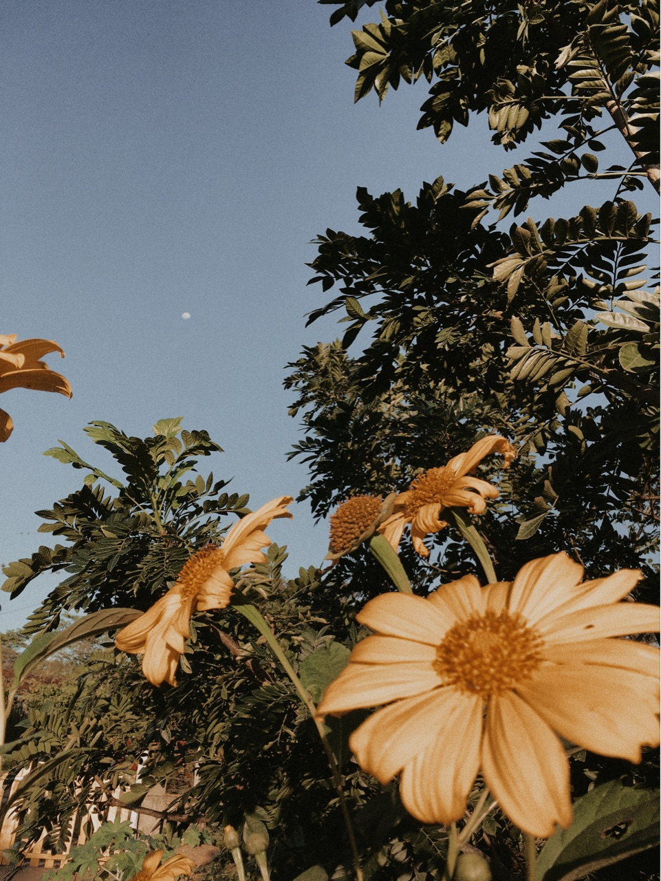 flowers, moon, and nature image