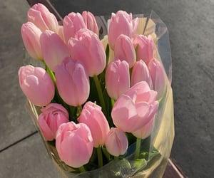aesthetics, flowers, and tulips image