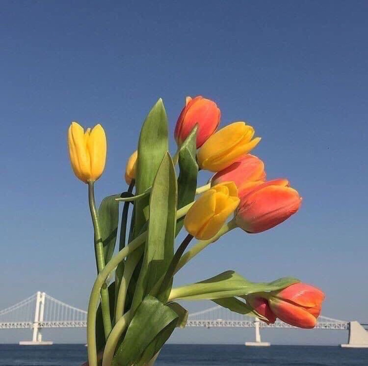 flores, flowers, and tulipanes image