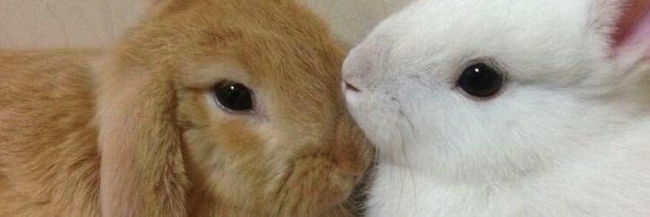 bunny, header, and kpop image