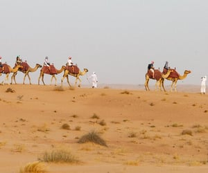 11 things to do in dubai image