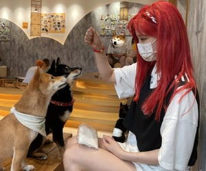 chinese, dogs, and girl image