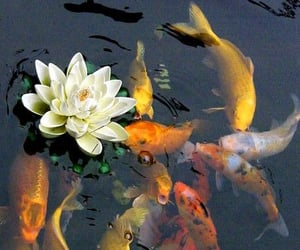 fish, flowers, and nature image