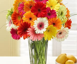 baltimore florist, magnificent roses, and flower delivery maryland image