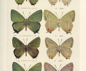 aesthetic, butterfly, and green image