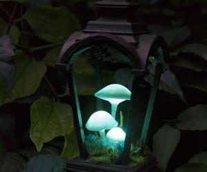 Fairies, mushrooms, and fairy image