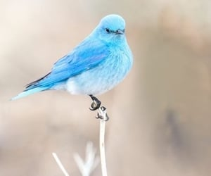 aesthetic, angelic, and bird image