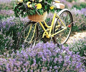 Morning bicycle ride with a bunches of flowers inside the front basket.