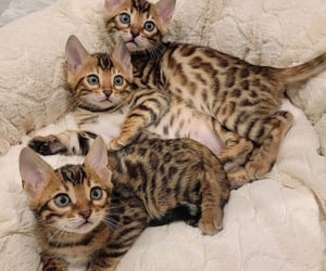 animal, furry, and cat image