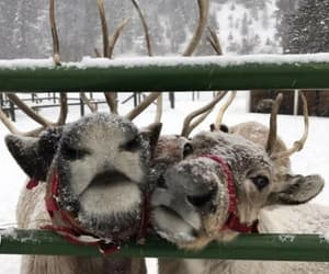 snow, animals, and december image