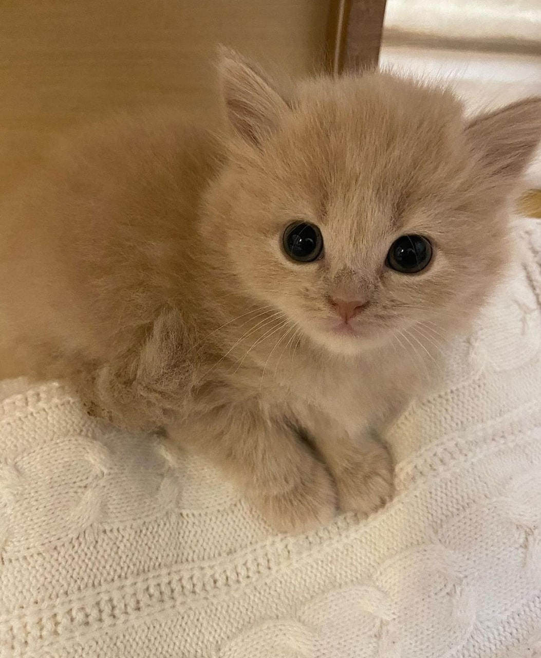animals, puppies, and cute cats image