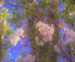 aesthetic, branch, and flowers image