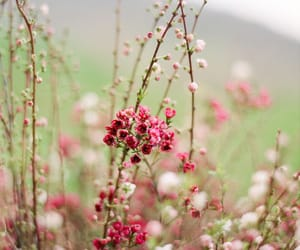 country, flowers, and pink image