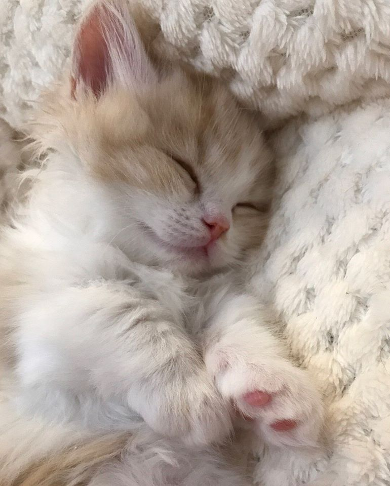 cute cats, sweet cats, and animals image