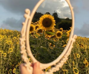sunflower, aesthetic, and photography image