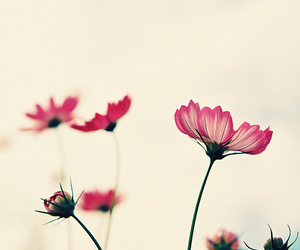 flowers, cute, and love image