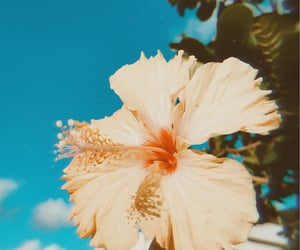 flowers, inspiration, and nature image