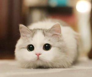 very cute and ♥ image
