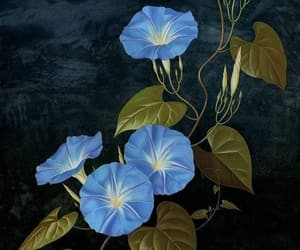 morning glory, art, and heavenly blue image