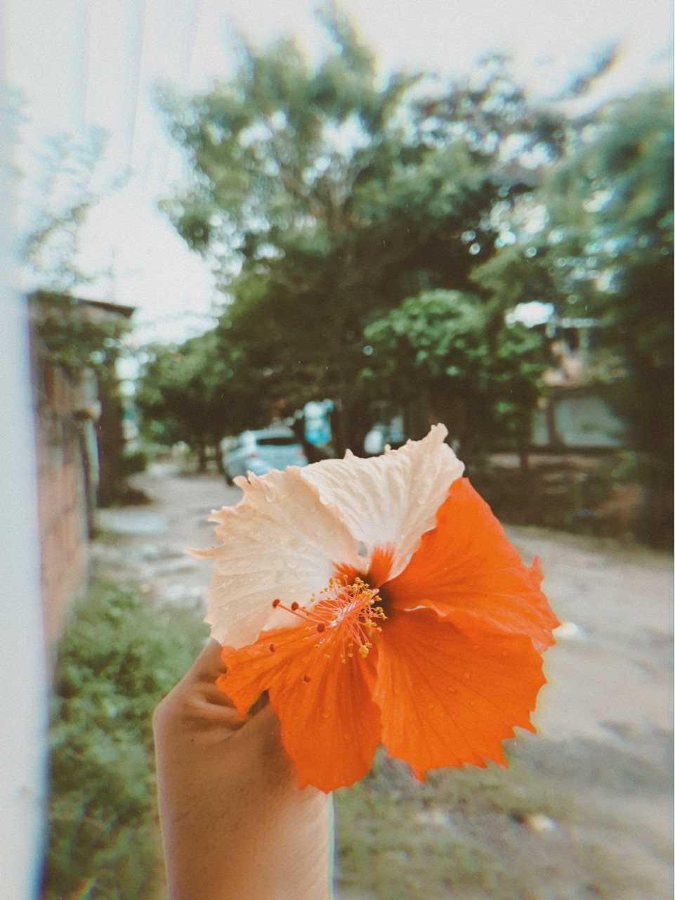 flowers, vintage, and inspiration image