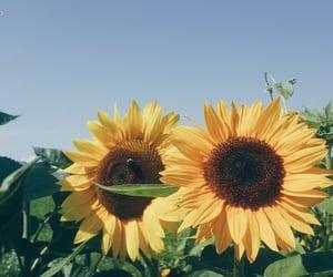 autumn, nature, and photo image