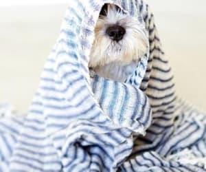 dog, towel, and bathtime image