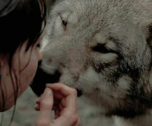 aesthetic and wolf image