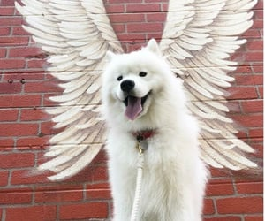 dog, puppy, and angel image