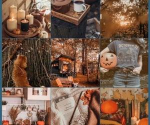 autumn, orange, and brown image