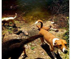 dogs, portugal, and alexandrafragoso image