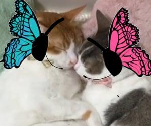 cats, hugs, and weird image
