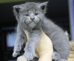 adoption, animals, and cats image