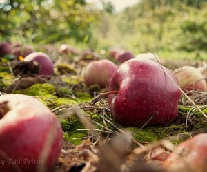 aesthetic, apple, and apples image
