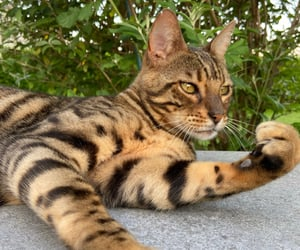 cat, raw, and chat image