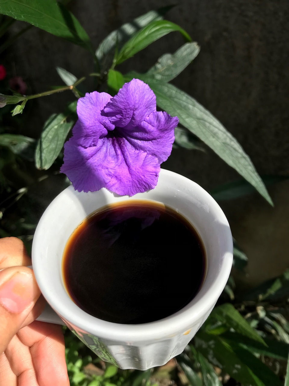 coffee and morning image