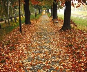 autumn, orange, and yellow image