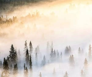 finland, nature, and travel image