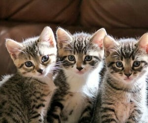adorable, kittens and animals