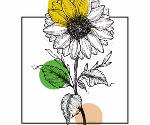 arte, colores, and flor image