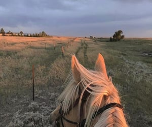 horse, aesthetic, and adventure image