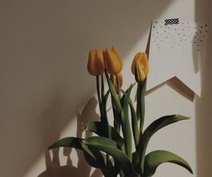 flowers, aesthetics, and sun light image