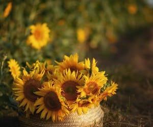 Sunflower Summer ♡