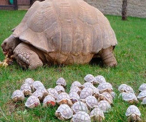 80-year-old tortoise and her babies....( photo by Nature Is Amazing ) via Twitter