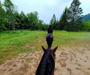 activity, horses, and québec image