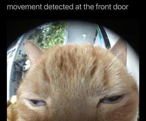 front door and movement detected image